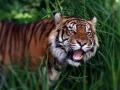 Platz Nr. 22 'Tiger' (Helmut Lippert)